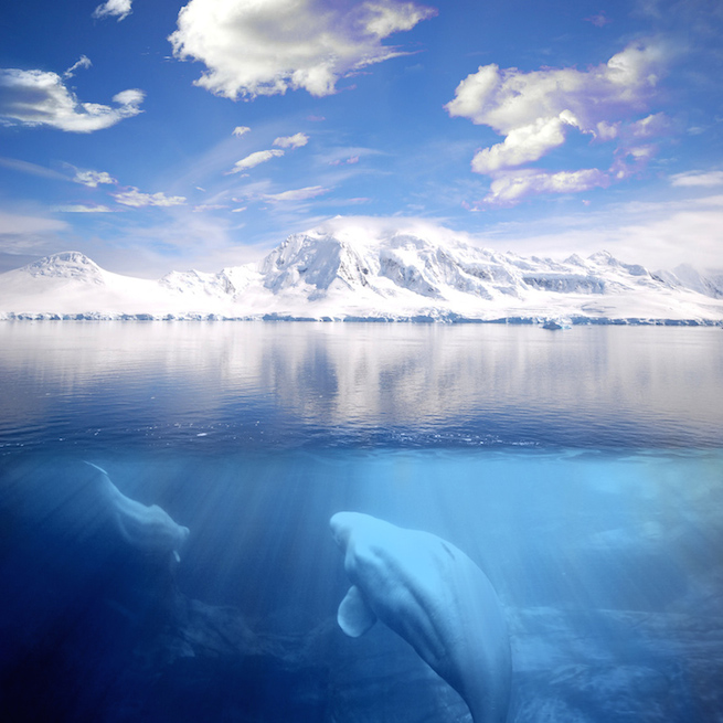 Whales underwater in the foreground while snow covered peaks on land in the background